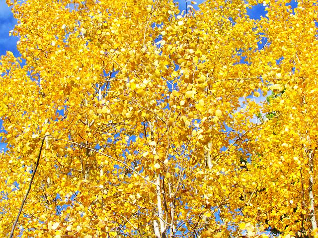 blue and gold at Ginty Creek