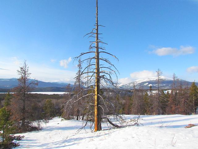 north bluff snag at Ginty Creek.