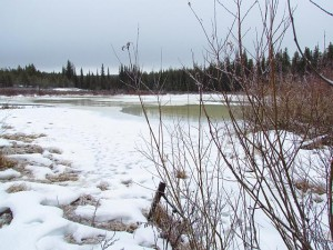 thawing again (January Rain at Ginty Creek)