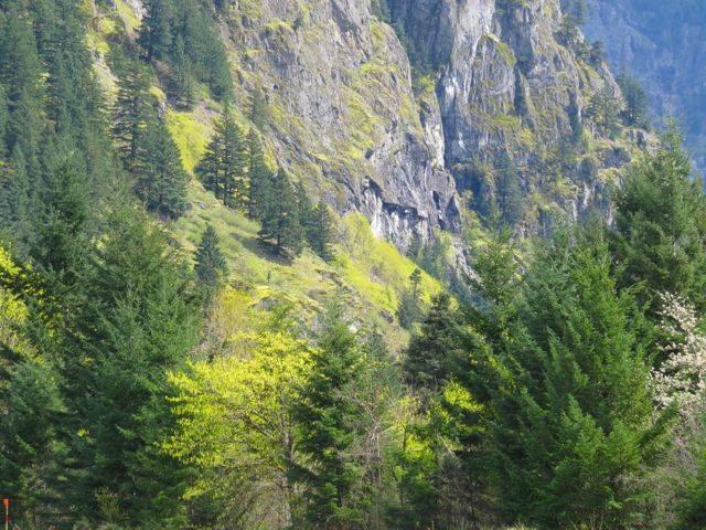 spring in Fraser Canyon