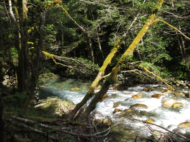 Thorston Creek near Bella Coola