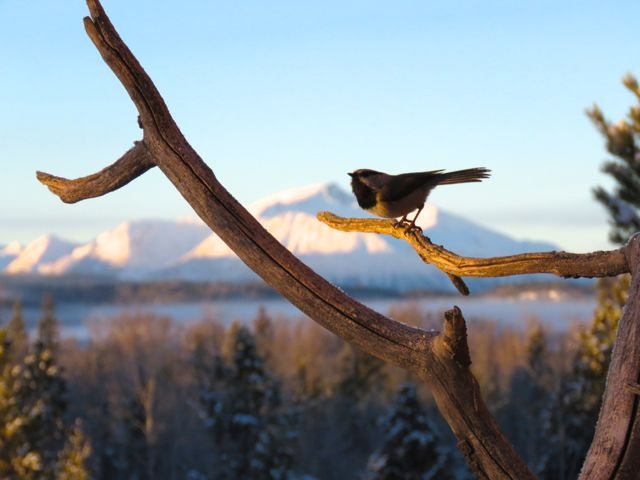 chickadee and Middle Mountain